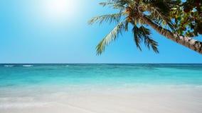 Paraíso tropical almacen de metraje de vídeo