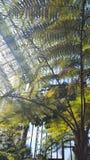 Paraíso verde Foto de archivo libre de regalías