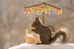 Parasol of eggs. Close up of red squirrel beneath a umbrella with eggs with basket and broken eggs, snow and chair Stock Photos