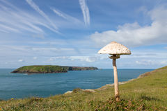 Parasol Mushroom Growing on a Coastal Clifftop Royalty Free Stock Images