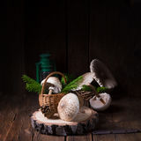 Parasol mushroom Macrolepiota procera or Lepiota procera. A parasol mushroom Macrolepiota procera or Lepiota procera Stock Photos