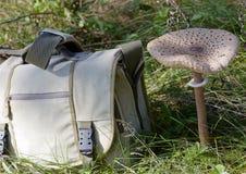 Parasol mushroom (Macrolepiota procera) and travel bag Stock Photos