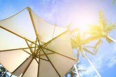Parasol onder kokospalmen tegen blauwe hemel op een zeer hete dag Stock Foto's