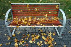 Parasol tree leaves with bench Royalty Free Stock Photos
