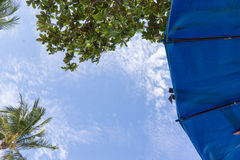 Parasol and trees against blue sky. Under a bright blue parasol, palms waving in the wind Stock Images