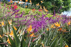 Parasole di legno su un giardino del ricorso Fotografia Stock Libera da Diritti