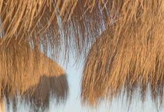 Parasoles de la paja en luz de oro en la puesta del sol foto de archivo