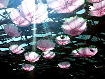 Parasolowi cienie obrazy royalty free