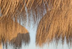 Parasols de paille dans la lumière d'or au coucher du soleil photo stock