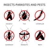 Parassiti degli insetti e parassiti 3 Fotografia Stock