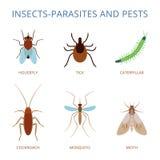 Parassiti e parassiti degli insetti Fotografia Stock