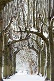 Parata della neve Fotografie Stock Libere da Diritti