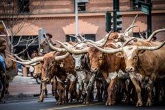 Parata di riserva occidentale nazionale di manifestazione Fotografia Stock