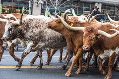Parata di riserva occidentale nazionale di manifestazione Immagine Stock Libera da Diritti