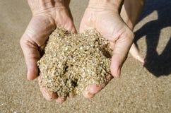 沙子神仙的壳在Paraty 库存照片
