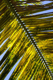 棕榈叶在Paraty 库存照片