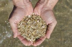 沙子神仙的壳在Paraty 免版税库存图片