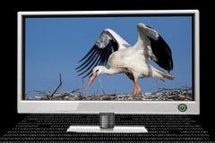Parawanowy monitor Zdjęcia Royalty Free