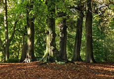 Parc à Bruges flanders belgium photographie stock libre de droits