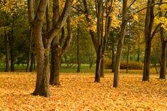 Parc à l'automne photographie stock