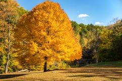 Parc abandonné en automne Photos libres de droits