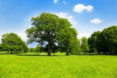 Parc anglais vert Photo libre de droits