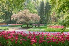 Parc au printemps Image libre de droits