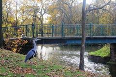 Parc in autunno a Liverpool Fotografia Stock Libera da Diritti