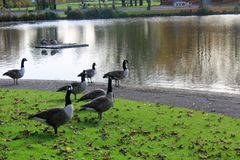 Parc in autunno a Liverpool Immagine Stock
