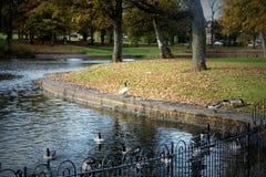 Parc in autunno a Liverpool Fotografie Stock Libere da Diritti