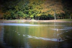 Parc in autunno a Liverpool Immagini Stock