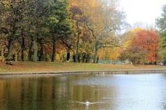 Parc in autunno a Liverpool Immagine Stock Libera da Diritti
