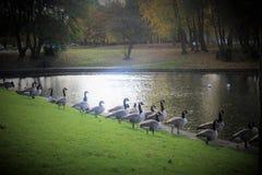 Parc in autunno a Liverpool Immagini Stock Libere da Diritti