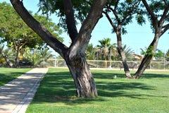 Parc avec des arbres Photographie stock