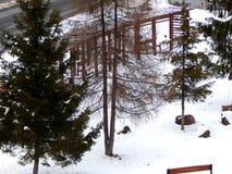 Parc avec des arbres et des bancs à l'hiver Photo libre de droits