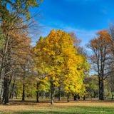 Parc avec des châtaignes d'automne Photos stock
