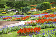 Parc avec des fleurs Photo stock