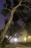 Parc avec le brouillard Photos stock