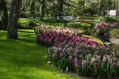 Parc avec les fleurs multicolores de ressort Images libres de droits