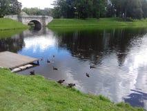 Parc avec une rivière et des canards Photographie stock