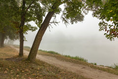 Parc brumeux près de lac images libres de droits