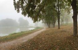 Parc brumeux près de lac image stock