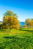 Parc coloré par automne herbeux photographie stock