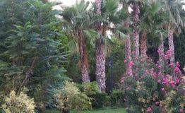 Parc d'été avec des arbres, des fleurs, des montagnes et des palmiers à Antalya, Turquie Juste avant le crépuscule Photos stock