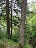 Parc d'état d'automnes de White River Tahquamenon de cascade de chutes de rapide de Forest Rocks Trees River photographie stock
