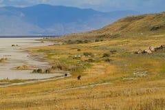 Parc d'état d'île d'antilope Images libres de droits