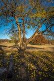 Parc d'état de Fall River le Kansas Images stock