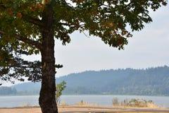 Parc d'état de roche de coq en Orégon photographie stock libre de droits
