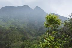 Parc d'état de vallée d'Iao sur Maui Hawaï Image libre de droits