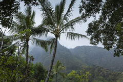 Parc d'état de vallée d'Iao sur Maui Hawaï Images libres de droits